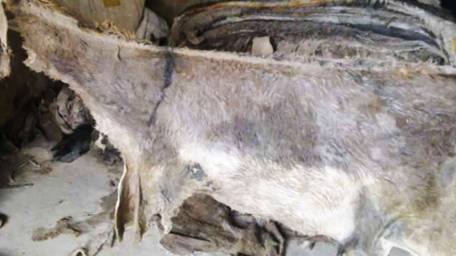 Bid to smuggle donkey hides foiled in Karachi