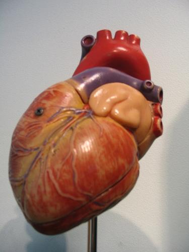 Fake Heart