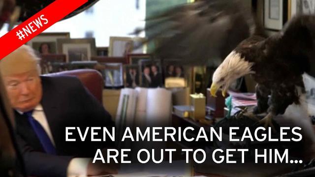 Eagle attacked Donald Trump