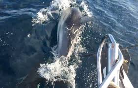 Amazing Fishing Trip-Whales Dolphins and Seals