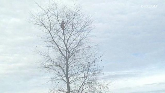 Little boy rescued after climbing 50-foot tree