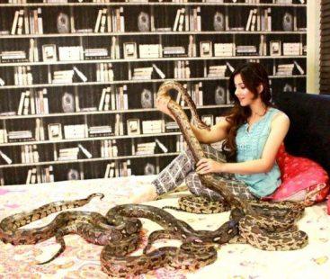 Case against Rabi Peerzada over possessing exotic animals dismissed