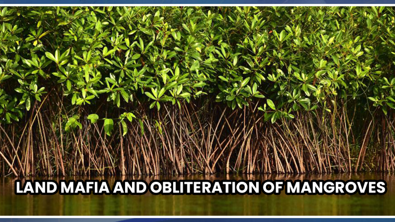 Land mafia and obliteration of mangroves