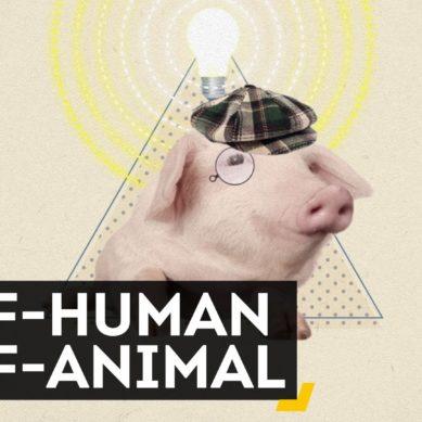 کیا جانوروں میں انسانی اعضاء پروان چڑھانا درست ہے؟