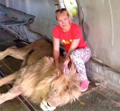 خوش قسمت خاتون : شیر کا نوالہ بنتے بنتے بچیں