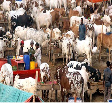 مویشی منڈی ضرور جائیں، مگر احتیاط اپنائیں