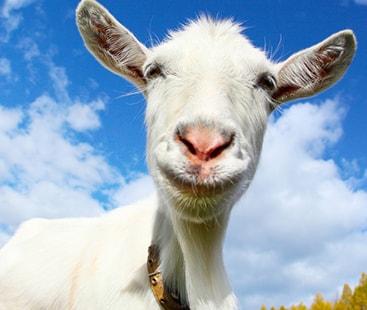 مسکرائیں اب جانور بھی خوش مزاج افراد کو پسند کرتے ہیں۔