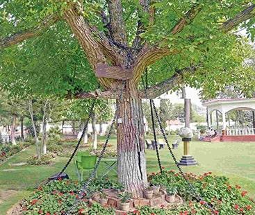 نشے میں دھت انگریز فوجی آفیسر نے درخت کو قید کروادیا۔