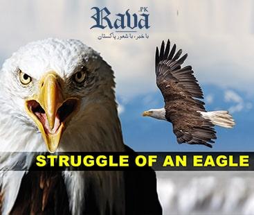 عقاب سے سیکھیں
