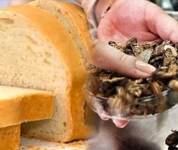 پروٹین سے بھری، لال بیگ ڈبل روٹی کھانے کے لیے تیار ہوجائیں