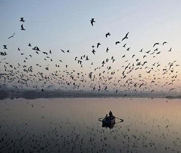 شکار ہونے کے خوف سے مہمان سائبیرین پرندوں کی آمد میں کمی