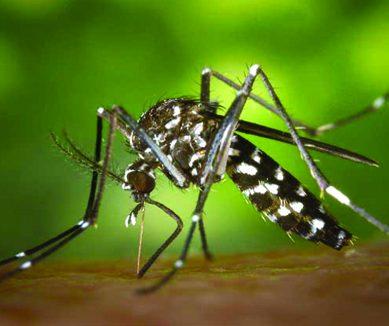 طبی دنیا میں انقلاب، ملیریا سے بچاؤ کی ویکسین متعارف