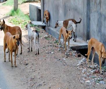 کراچی میں کتے کے کاٹنے سے رواں برس تعداد 20 ہوگئی