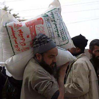 پنجاب میں کوئی آٹا بحران نہیں ، گندم وافر مقدار میں موجود ہے:حکومت پنجاب