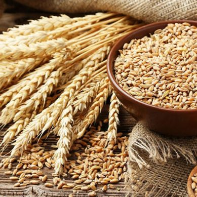 پاکستان میں 100 کلو گندم کی بوری 500 روپے مہنگی ہوگئی