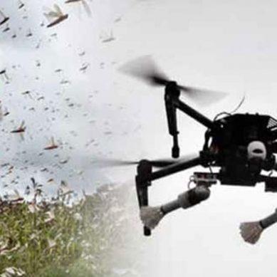 ٹڈی دل کے خاتمے کیلئے فصلوں پر ڈرون سے اسپرے