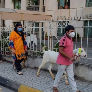 وفاقی حکومت کا عیدالاضحیٰ پر تین دن کی چھٹی دینے کا فیصلہ