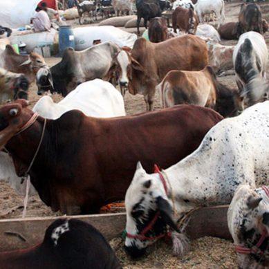 غیر قانونی مویشی منڈیوں کے خلاف کریک ڈاؤن کا فیصلہ