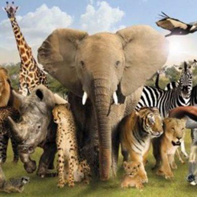 دنیا کے ذہین ترین جانور ۔۔