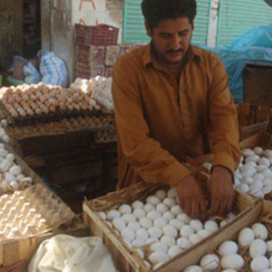 پشاور: موسم سرما سے قبل ہی انڈوں کی قیمتوں میں اضافہ