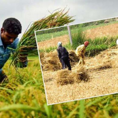 پاکستان میں آج کسانوں کا دن