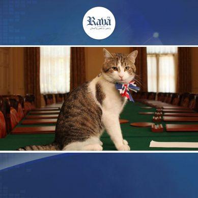 cat 389x389