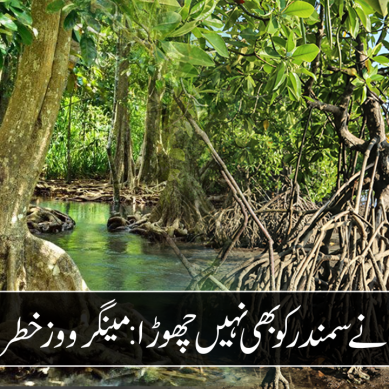 لینڈ مافیا  نے سمندر کو بھی نہیں چھوڑا : مینگرووز  خطرے میں