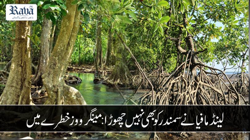 mangrove 808x454
