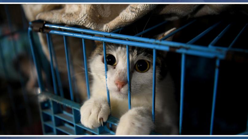 جانوروں میں کورونا وائرس روکنے کے لیے اقدامات کیا؟؟