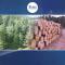 جنگلات کے تحفظ کا منصوبہ ،ریڈ پلس۔۔۔اب ہر درخت سرمایہ ہے
