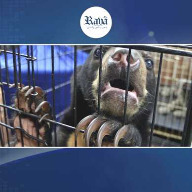 ہوشیار۔۔۔! زندہ جانوروں سے مزید کورونا جیسی نئی وباء پھیلنے کا خطرہ