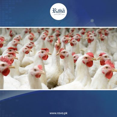 chicken rate 389x389