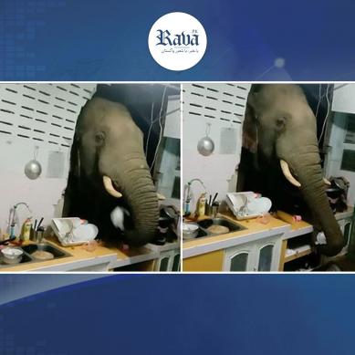 ہاتھی غصے میں آپے سے باہر، دیوار توڑ کر گھر میں جا گھسا