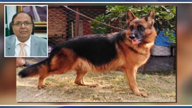 doggy 808x454