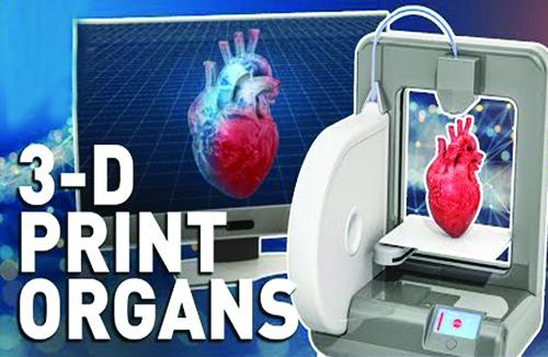 human organs web