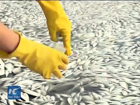 Dead fish wash up in Tianjin River, no cyanide found