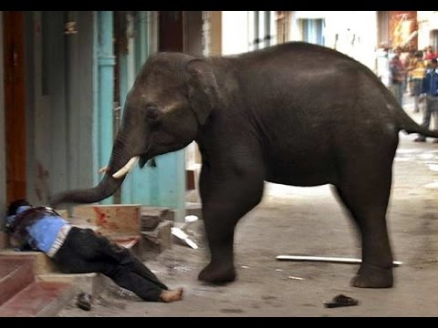 Rampaging Elephant Damages Buildings