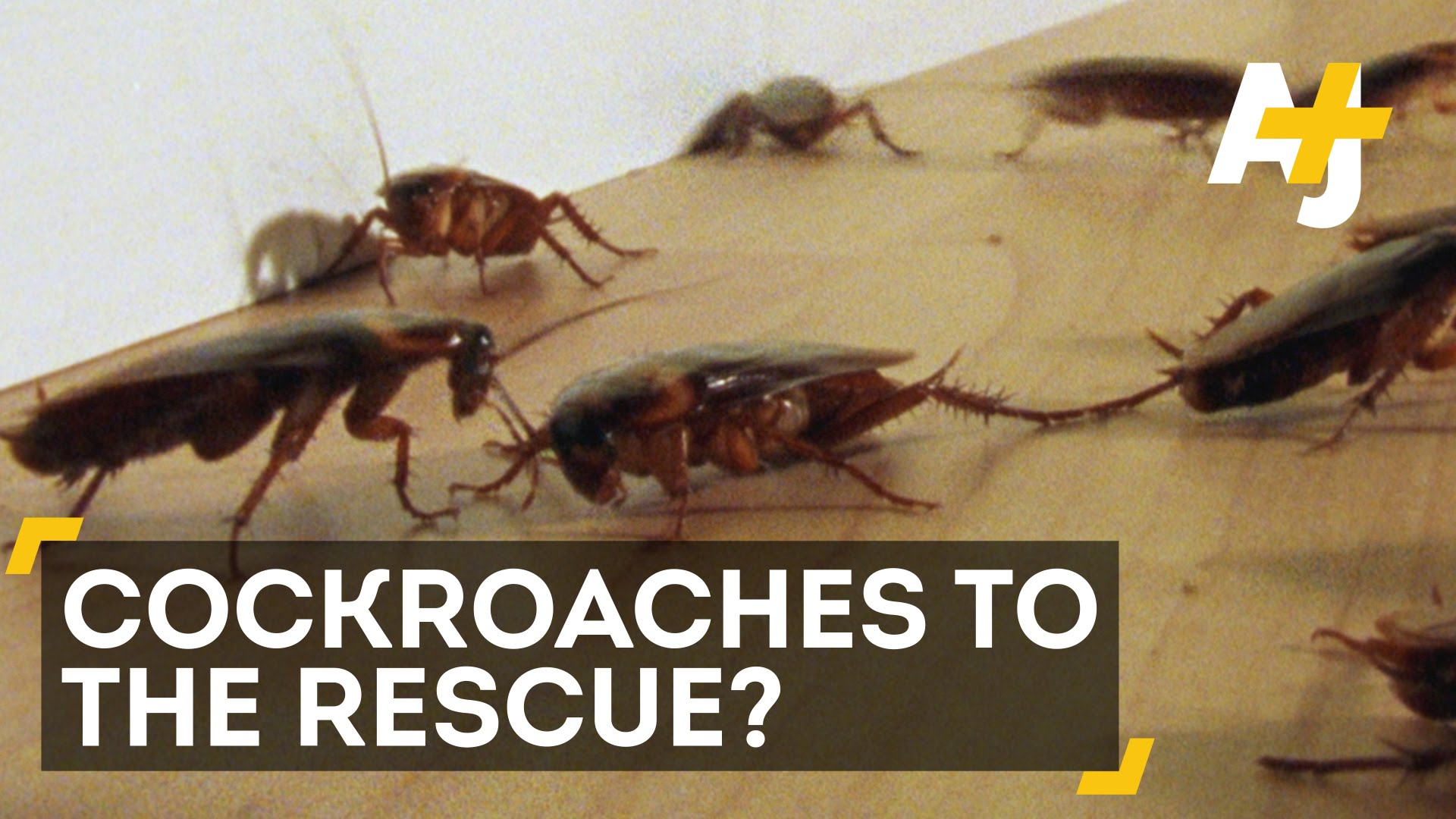 Cockroach Robots Just Might Save You