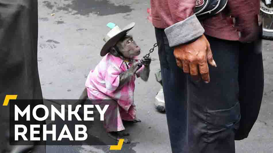 Street Monkeys Get Second Chance In Indonesia