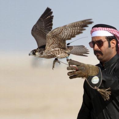 16 Members of Qatar Emir's Staff Arrested In Quetta