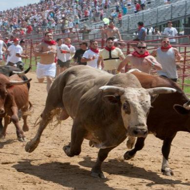 Worst Bull Kick Ever