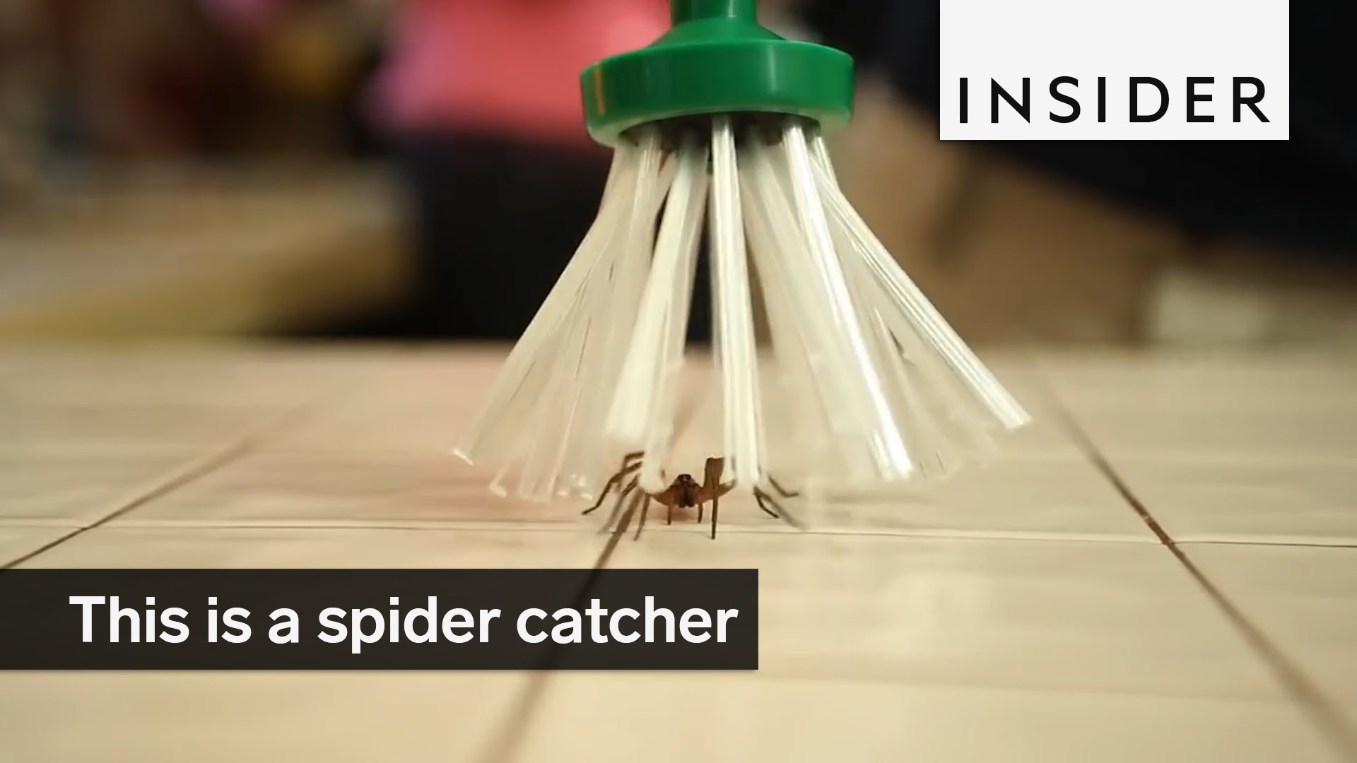 A Spider Catcher