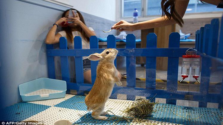 Rabbitland Cafe in Hong Kong