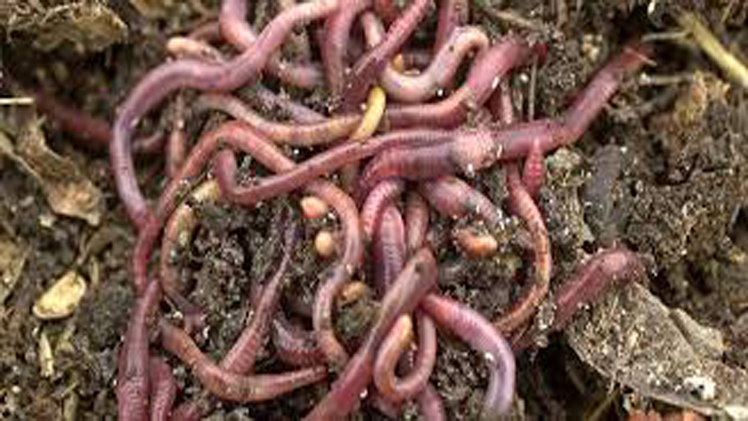 Crazy Snake Worms