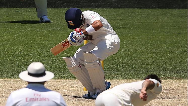 Cricket-100