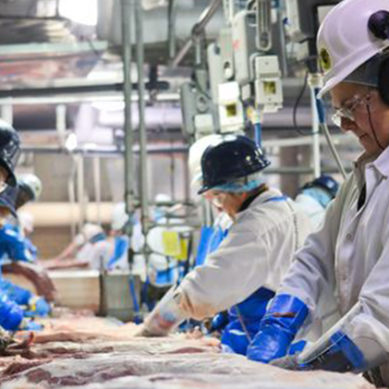 Wagyu Beef Factory