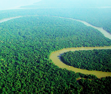 Amazon Rainforest Designs Created 200 Years Ago
