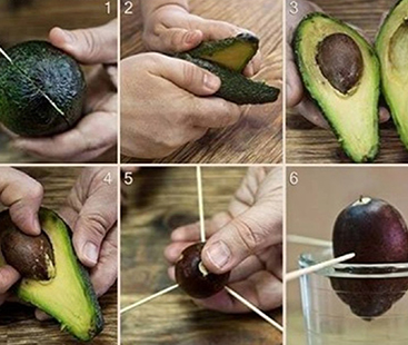 Grow Your Own Avocados