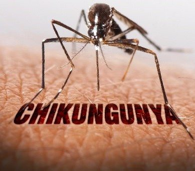 Chickungunya Outbreak – WHO Team Arrives to Investigate