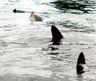 Fisherman Survives As Shark Jumps Onto A Boat